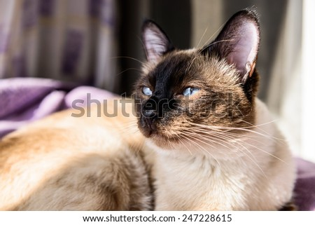 Beni cat sunning  - stock photo