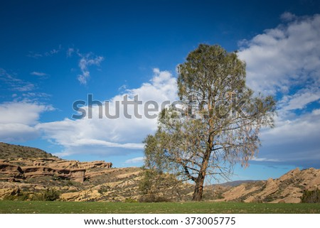 Bent lonely pine tree leans over a field in southwest United States desert.
