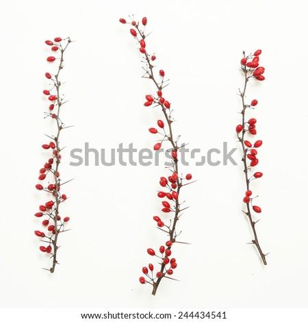Berberis vulgaris twigs,  Tree branches of red berberis  with ripe fruits on white  - stock photo