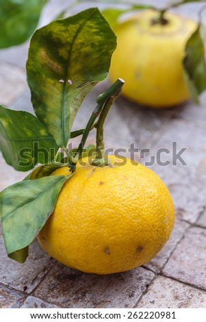 Bergamot from Calabria, Italy - stock photo