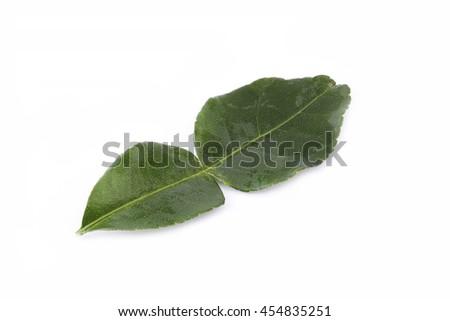 Bergamot (kaffir lime) leave  isolated on white background. - stock photo