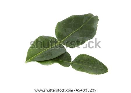 Bergamot (kaffir lime) leaves  isolated on white background. - stock photo