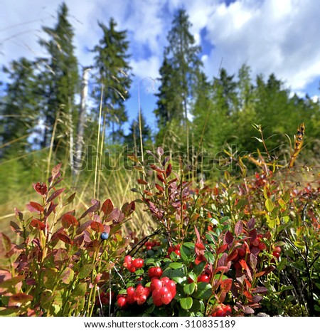 Berries in the forest. Sunny summer day - stock photo