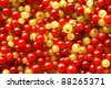 Berries of red and white currant, for backgrounds or texture - stock photo