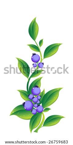 Berry - stock photo