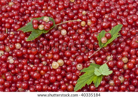 berry currant red and white with green leaves