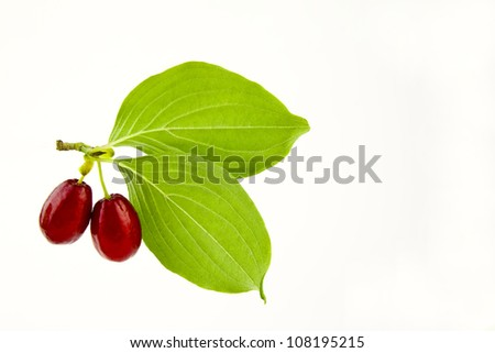 Berry  isolated  background - stock photo