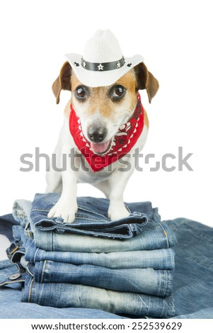 Best fashionable denim dog in the set of jeans things - stock photo