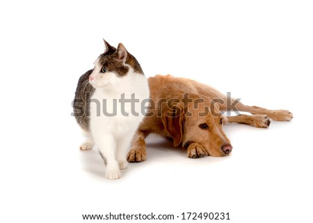 Best Friends, a cat and a dog - stock photo