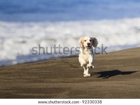 Best friends are always happy to see you. Dog in good health. - stock photo