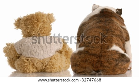 best friends - backside view of an english bulldog and a teddy bear - stock photo