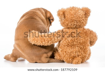best friends - dog and teddy bear with arm around each other from behind - stock photo