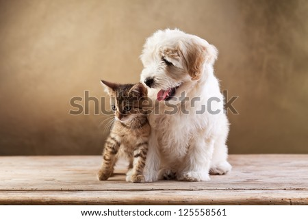 Best friends - kitten and small fluffy dog looking sideways - copy space - stock photo