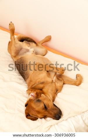 Best sleeping position - enhanced colors - stock photo