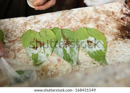 Betel leaf eating culture of Southeast Asia - stock photo