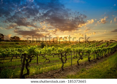 Bethany Barossa Vineyard