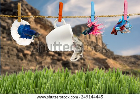 Betta and Hamster hanging on the clothesline,landscape background  - stock photo