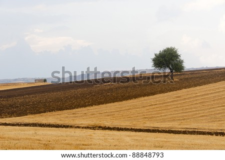 Between Puglia and Basilicata (Italy): Country landscape at summer