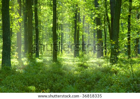 beutifoul place - forest in Poland