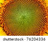 beutiful close-up sunflower - stock photo