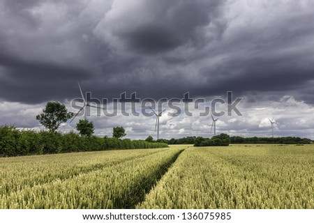 Beverley, Yorkshire, UK. Wheat field ready for harvesting with wind turbines on the horizon with heavy clouds but a  bright day.