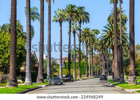 BEVERLY HILLS, CA - OCT 21: Palm trees street in Beverly Hills, Los Angeles, California, USA seen on OCT 21, 2014. Beverly Hills is famous for high-end shopping venue and celebrities homes - stock photo