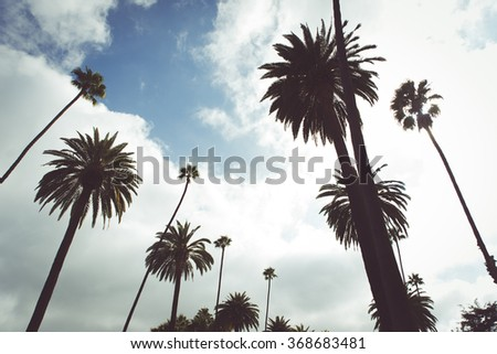 Beverly hills street and palms. Typical californian trees. Concept about travels and places - stock photo
