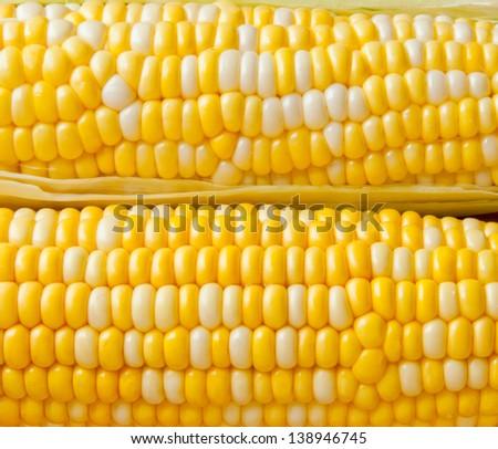 Bi-colors sweet corn ears background. - stock photo