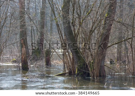 Bialowieza Forest riparian stand flooded in springtime morning,Bialowieza Forest,Poland,Europe - stock photo
