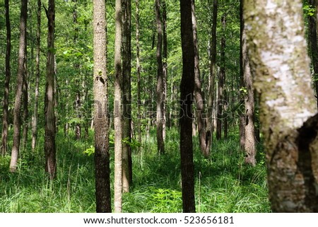Bialowieza National Park strict nature reserve - forest with understory