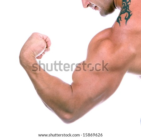 Bicep close up , isolated on white - stock photo