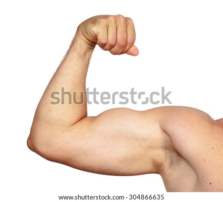 Biceps muscle isolated on white
