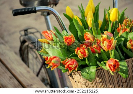 Bicycle basket with tulips  - stock photo