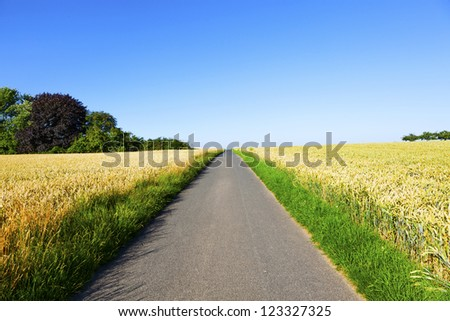 bicycle lane through corn fields under blue sky - stock photo