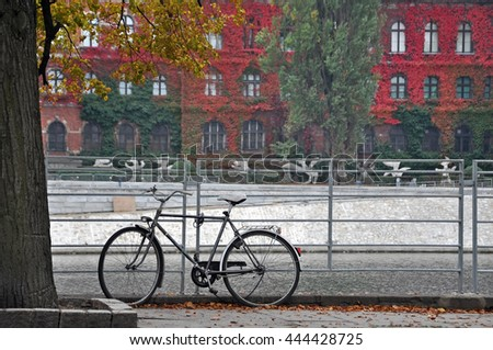 Bicycle parked near a tree in autumn. Old building with red ivy on the facade in the background. Wroclaw, Poland.