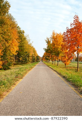 Bicycle road leads across the autumn trees