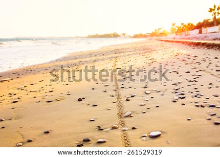 Bicycle tire tracks on sandy sea beach.