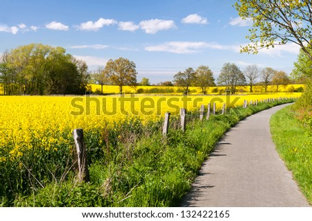 Bicycle trail next to bright yellow canola fields - stock photo
