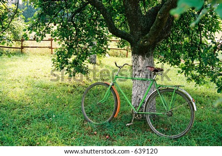 Bicycle  under an apple-tree
