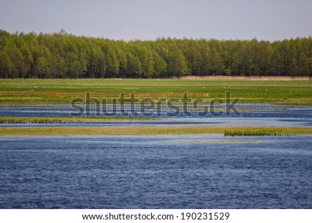 Biebrza river view next to forest - stock photo