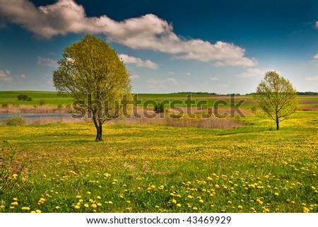 Biebrza swamps in Poland - stock photo