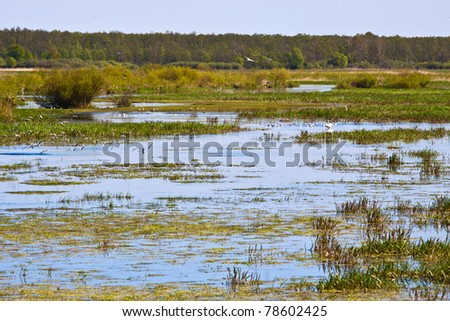 Biebrza swamps national reserve - stock photo