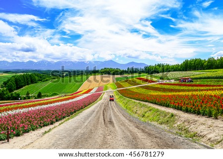 BIEI, JAPAN-JULY 22: Colorful flower field at Shikisai-no-oka, Biei, Japan on July 22, 2013. This is the beautiful farm for flower blooming scenic during summer of Hokkaido. - stock photo