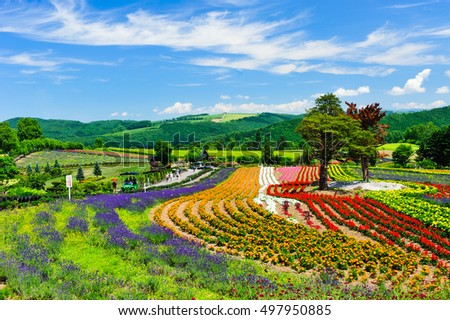 BIEI, JAPAN - JULY: Many flower in Hill of Zerubu & Hill of Atoms, famous garden of Biei, Hokkaido, Japan on July, 2014.