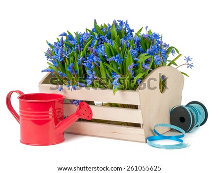 bifolia in box and watering can isolated on a white background - stock photo