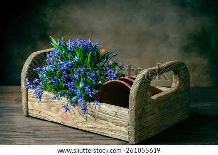 bifolia in box with pots on dark background - stock photo