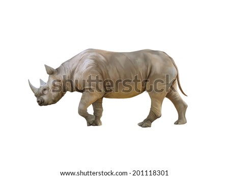 Big african Rhino isolated on a white background - stock photo