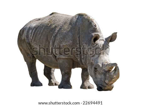 Big african rhinoceros, isolated on white.