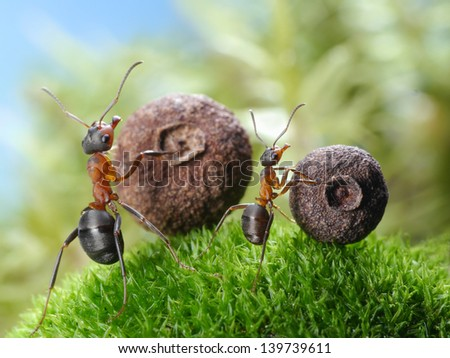 big and little ants roll corresponding seeds, ant tales - stock photo