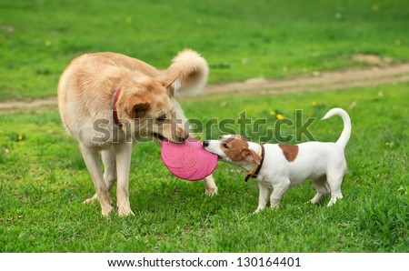 big and small dog bear pink frisbee - stock photo